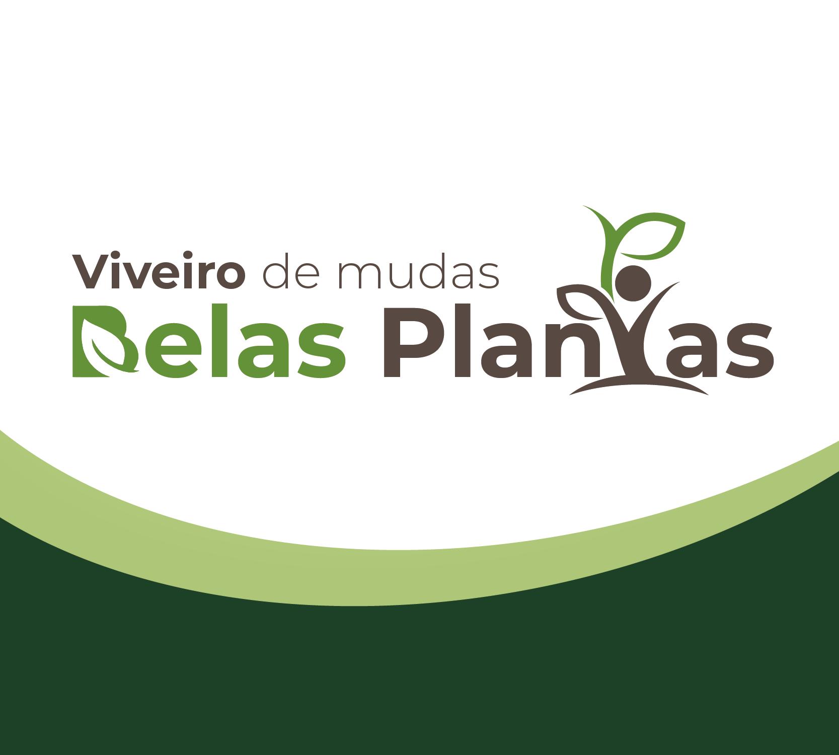 Viveiro de Mudas Belas Plantas em Guarujá